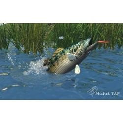 Bass topwater